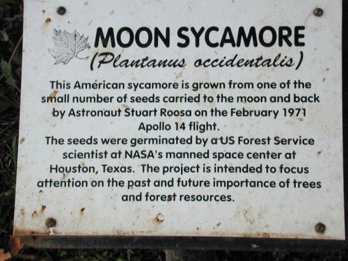 MoonSycamore